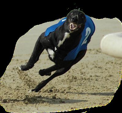 galloping_aagreyhound2